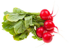 Fresh radishes isolated on white Stock Photo