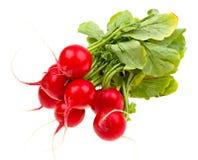 Fresh radishes isolated on white. Background Royalty Free Stock Photos