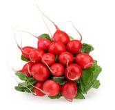 Fresh radishes isolated on white.  Royalty Free Stock Image