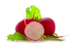 Fresh radishes . Fresh radishes isolated on white background Royalty Free Stock Photography