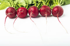 Fresh radishes. Isolated on white background Royalty Free Stock Photos