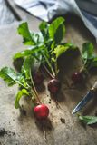 Fresh Radishes on Kitchen Table. With knife Royalty Free Stock Images
