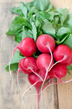 Fresh radishes. Fresh radishes with leaves on the Table Stock Photography