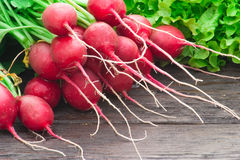 Fresh radishes and lettuce Royalty Free Stock Images