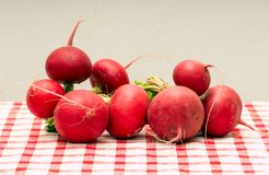 Fresh radishes link with roots. From the garden on the table Royalty Free Stock Photo