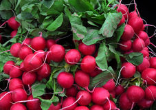 Fresh radishes in market, in Birmingham city center. Fresh radishes in market, in Birmingham Stock Images