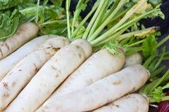 Fresh radishes in market. Close up fresh radishes in market Royalty Free Stock Images