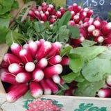 Fresh radishes on the market of lyon. Fresh radishes on the market of Croix Rousse Royalty Free Stock Photos