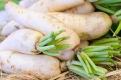 Fresh radishes in market Stock Photography