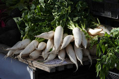 Fresh radishes on a market. Fresh white radishes with green leafs on a market Royalty Free Stock Images