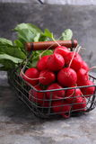 Fresh radishes in a metal basket Stock Image