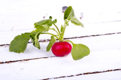 Fresh radishes on old wooden boards Royalty Free Stock Photo