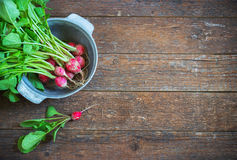 Fresh radishes on old wooden table. Bundle in a metal bowl Royalty Free Stock Images
