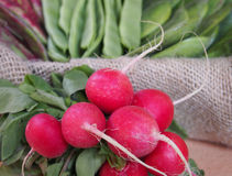Fresh radishes on old wooden table Royalty Free Stock Images