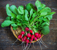 Fresh radishes on old wooden table. In a wicker basket Stock Photography