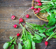 Fresh radishes on old wooden table. In a wicker basket Stock Photos