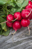 Fresh radishes. Fresh organic radishes on a wooden board for sale at the local farmers market Stock Photos
