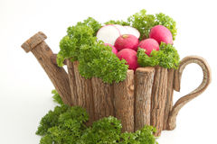 Fresh radishes  with pasley. Fresh radishes  with parsley in wooden pot Royalty Free Stock Photography