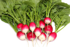 Fresh radishes on a plate. A bunch of fresh raw red radishes on a white plate Stock Image