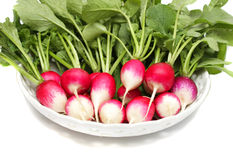 Fresh radishes on a plate. A bunch of fresh raw red radishes on a white plate Royalty Free Stock Photo