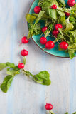 Fresh radishes. On a plate Stock Photo