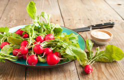 Fresh radishes on a plate. Fresh radishes with salt on a plate Royalty Free Stock Photo