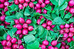 Fresh radishes. Of purple color and green leaves. Popular and healthy vegetable for making salads Stock Photo