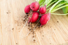 Fresh radishes, Raphanus sativus, on wooden plate. Fresh bunch of radishes, Raphanus sativus, on wooden plate ready to eat or add in healthy salads Stock Photos