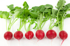 Fresh radishes in a row. Against white background Stock Image