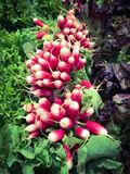 Fresh radishes. And salads in a market Stock Photography