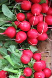 Fresh radishes. For sale in a greengrocery Stock Photo