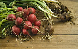 Fresh radishes and scallions. Bunch of freshly picked radishes and scallions covered in soil or dirt on wooden surface Royalty Free Stock Photos