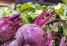 Fresh Radishes Section On Retail Supermarket.  Royalty Free Stock Image