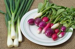 Fresh radish on a plate and green onions. Fresh radishes of several varieties on a plate Royalty Free Stock Photos