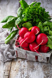 Fresh radishes, spinach and parsley. Fresh radishes, spinach, parsley. Selective focus Stock Photos