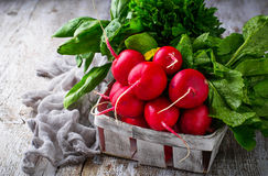 Fresh radishes, spinach and parsley. Fresh radishes, spinach, parsley. Selective focus Stock Photo