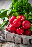 Fresh radishes, spinach and parsley. Fresh radishes, spinach, parsley. Selective focus Royalty Free Stock Images