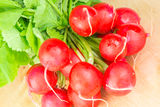 Fresh radishes with tops Royalty Free Stock Photo
