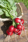Fresh radishes with tops in a wicker basket on a wooden table. Outside on a sunny day Stock Images