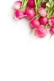 Fresh radishes vegetable. Fresh radishes isolated on white background. Healthy vegetable. Red radishes Stock Images