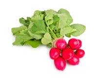 Fresh radishes on white. Fresh radishes on a white background Royalty Free Stock Image