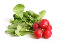 Fresh radishes Stock Image