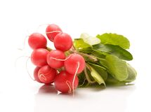 Fresh radishes. On a white background Stock Images