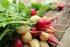 Fresh radishes Stock Photos