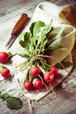 Fresh radishes on wooden background. Selective focus Stock Image