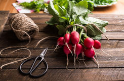 Fresh Radishes on wooden background selective focus. Fresh Organic Radishes on wooden background selective focus. Harvest concept Royalty Free Stock Photography