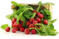 Fresh radishes in a wooden crate. On a white background Royalty Free Stock Image
