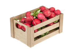 Fresh radishes in a wooden crate, isolated Royalty Free Stock Image