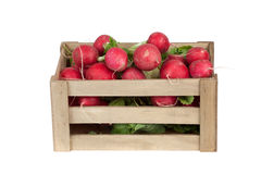 Fresh radishes in a wooden crate, isolated on white Stock Photography
