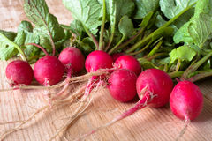 Fresh radishes on a wooden table. Fresh clean red radishes on the wooden table Royalty Free Stock Image